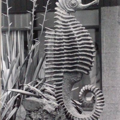 Seahorse - Merimbula